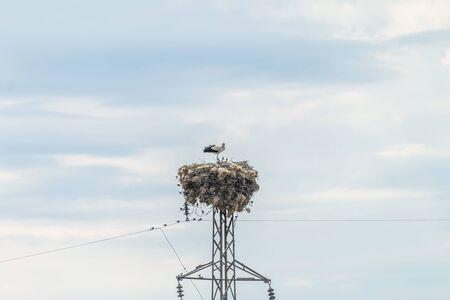 Stork family standing in nest Stok Fotoğraf - 131358932
