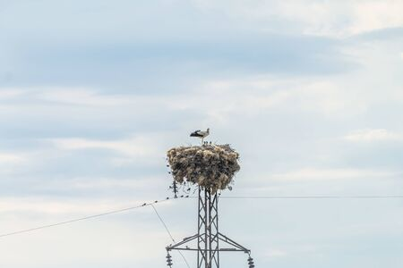 Stork family standing in nest Banque d'images - 131358934