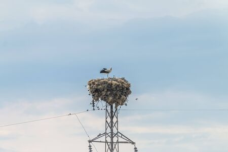 Stork family standing in nest Banque d'images - 131358935