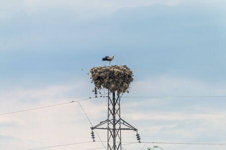 Stork family standing in nest