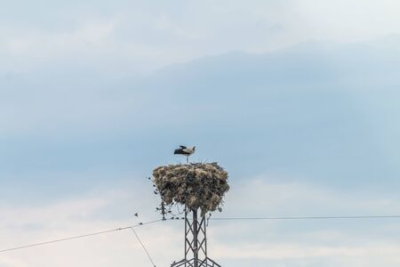 Stork family standing in nest Banque d'images - 131358937