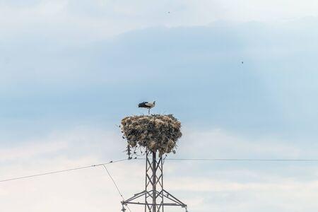 Stork family standing in nest Stok Fotoğraf - 131358938