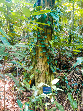 Jardim Botanico Botanic Garden Rio De Janeiro