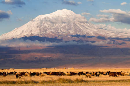 Mount Ararat and flock of sheep in the Eastern Turkey.