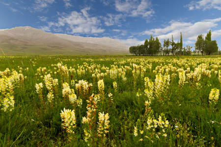 Wild flowers in the spring in Turkey.