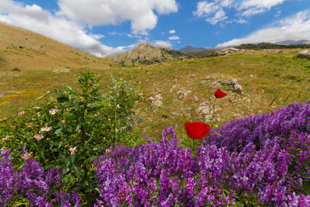 Wild flowers in the spring in Turkey.