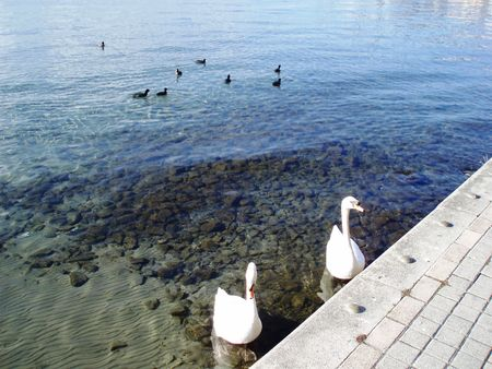 Macedonia-Ohrid,the lake with two swans photo