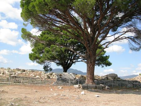 exported: Turkey,Pergamon,acroplis-This pine grows in places where it was the temple of Zeus exported to Germany. Stock Photo