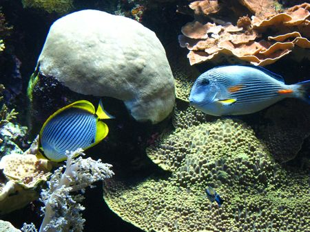 oceanographic: Different types of beautiful fish, molluscs, crustaceans and many kinds of algae, corals in the aquarium of the oceanographic museum in Monte Carlo. Stock Photo