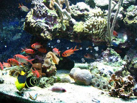 crustaceans: Different types of beautiful fish, molluscs, crustaceans and many kinds of algae, corals in the aquarium of the oceanographic museum in Monte Carlo. Stock Photo