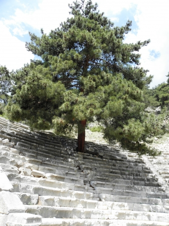 grew: Large pine tree grew between the seats in the amphitheater