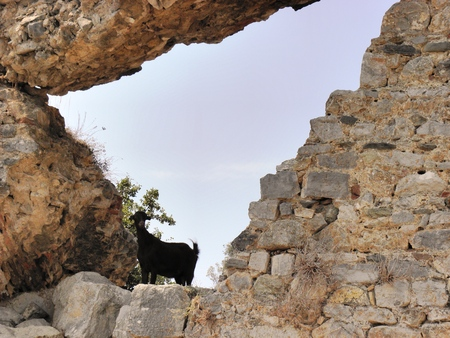 Black goat-like shadow perched on the ruins of the ancient Caunos
