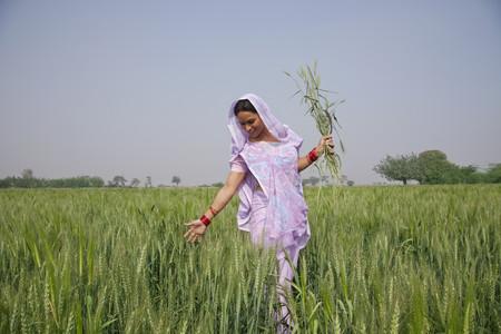 An Indian female farm worker walking through wheat field