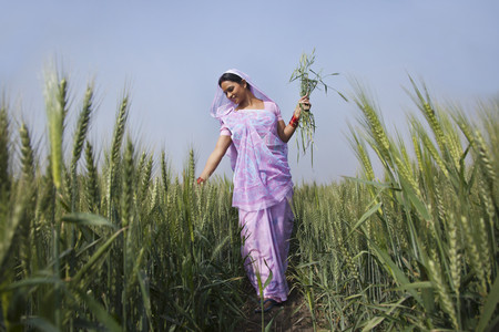 An Indian female farm worker walking through wheat field