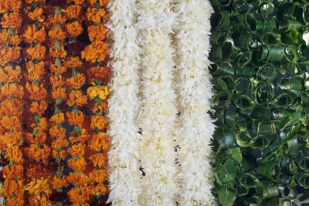 tricoloured: Different coloured flowers