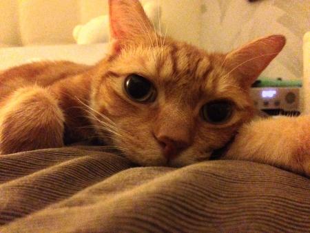 otganimalpets01: Sad kitty cat lying in bed Stock Photo