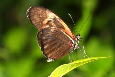 closeup of a beautiful butterfly photo