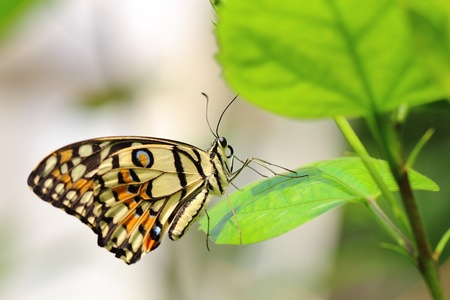 butterfly Stock Photo - 13295674