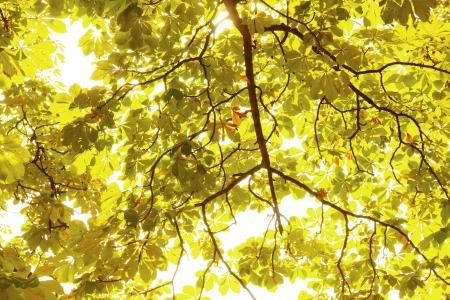 trees in autumn feeling Stock Photo