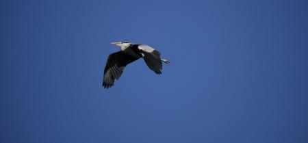 flying stork Stock Photo