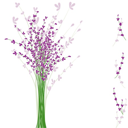 summertime purple Lavender flower on white background Stock Vector - 9931067