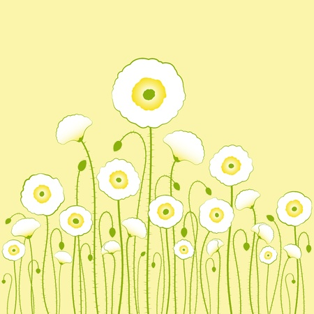 springtime: White poppy on yellow background