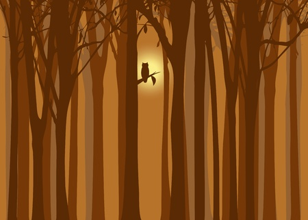 Halloween illustration autumn forest with owl Vector