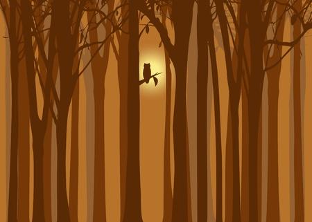 Halloween illustration autumn forest with owl Vector