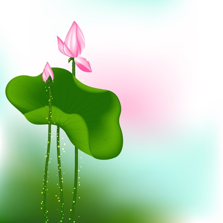 Pink Lotus Flower on Green Background Vector