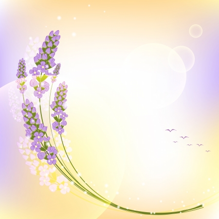 lavender flower: Purple Lavender Flower Colorful Background Illustration