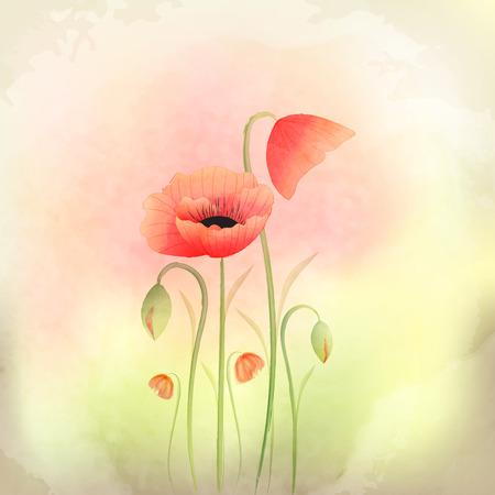 red flower: Springtime Watercolor Poppy Flower Background Stock Photo