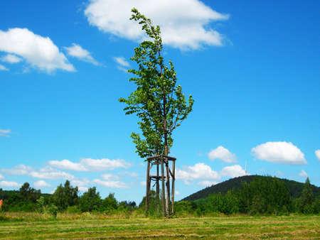 Lonely tree photo