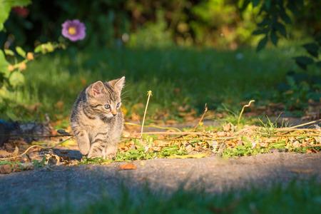 Kitten walks away in the garden