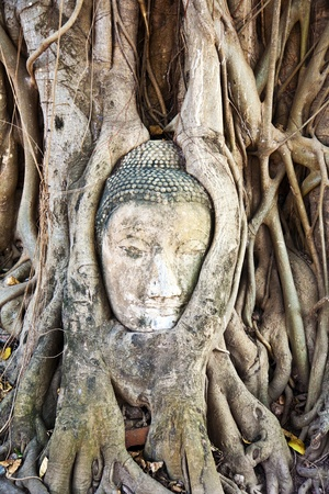 buddhas head in Mahathat temple in Ajutthaya is covered by roots of a tree photo