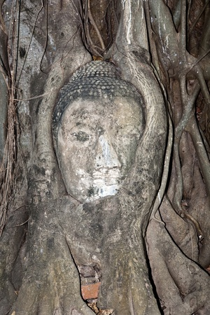 ajutthaya: buddhas head in Mahathat temple in Ajutthaya is covered by roots of a tree Stock Photo