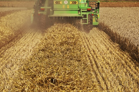 farm structures: green harvester in corn fields