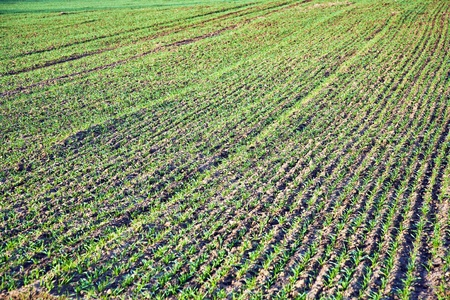 plowed field: Background of newly plowed field