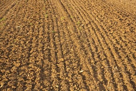 plowed: Background of newly plowed field