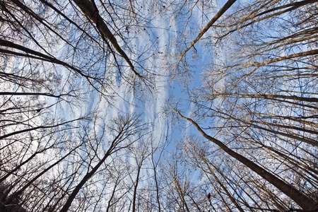 crown of trees in forest with blue sky photo