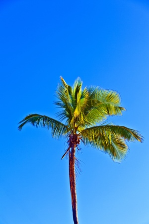 crown of palm tree with blue sky Stock Photo - 9218199