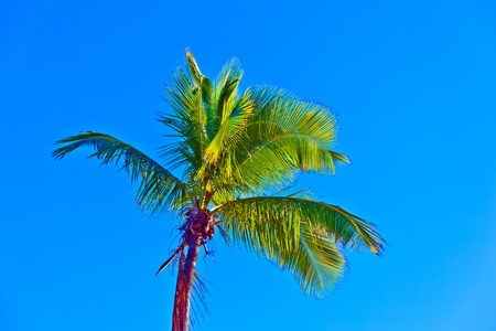 crown of palm tree with blue sky photo