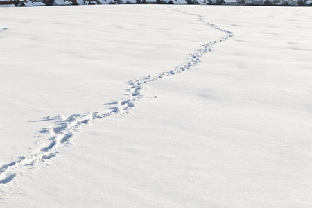 Footsteps on the snow in flat area photo