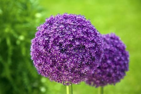 庭で美しい花