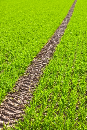 flat tyre: Tire Path In green Field in springtime Stock Photo