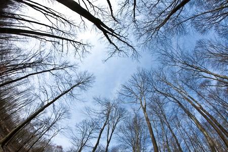 Spring tree crowns on deep blue sky photo