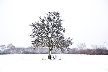 tree in winter with snow covered fields photo