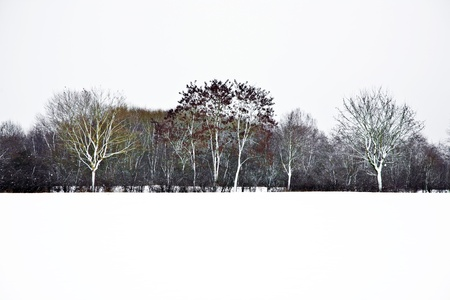 covered fields: trees in winter with snow covered fields