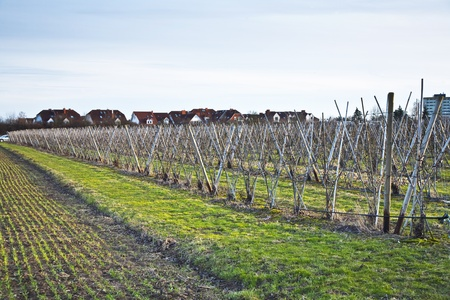 meadow in early spring fruit acre and housing area at horizon Stock Photo - 9301808