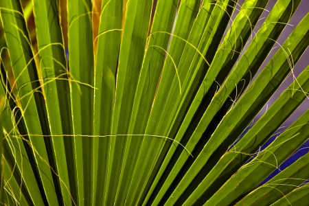beautiful palm leaf texture in sunset Stock Photo - 9324928
