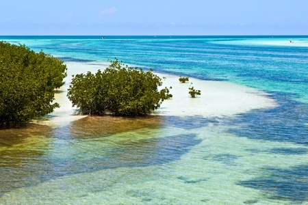 sandbank: beautiful scenic beaches and clear water in the Keys with palmes and mangroves Stock Photo